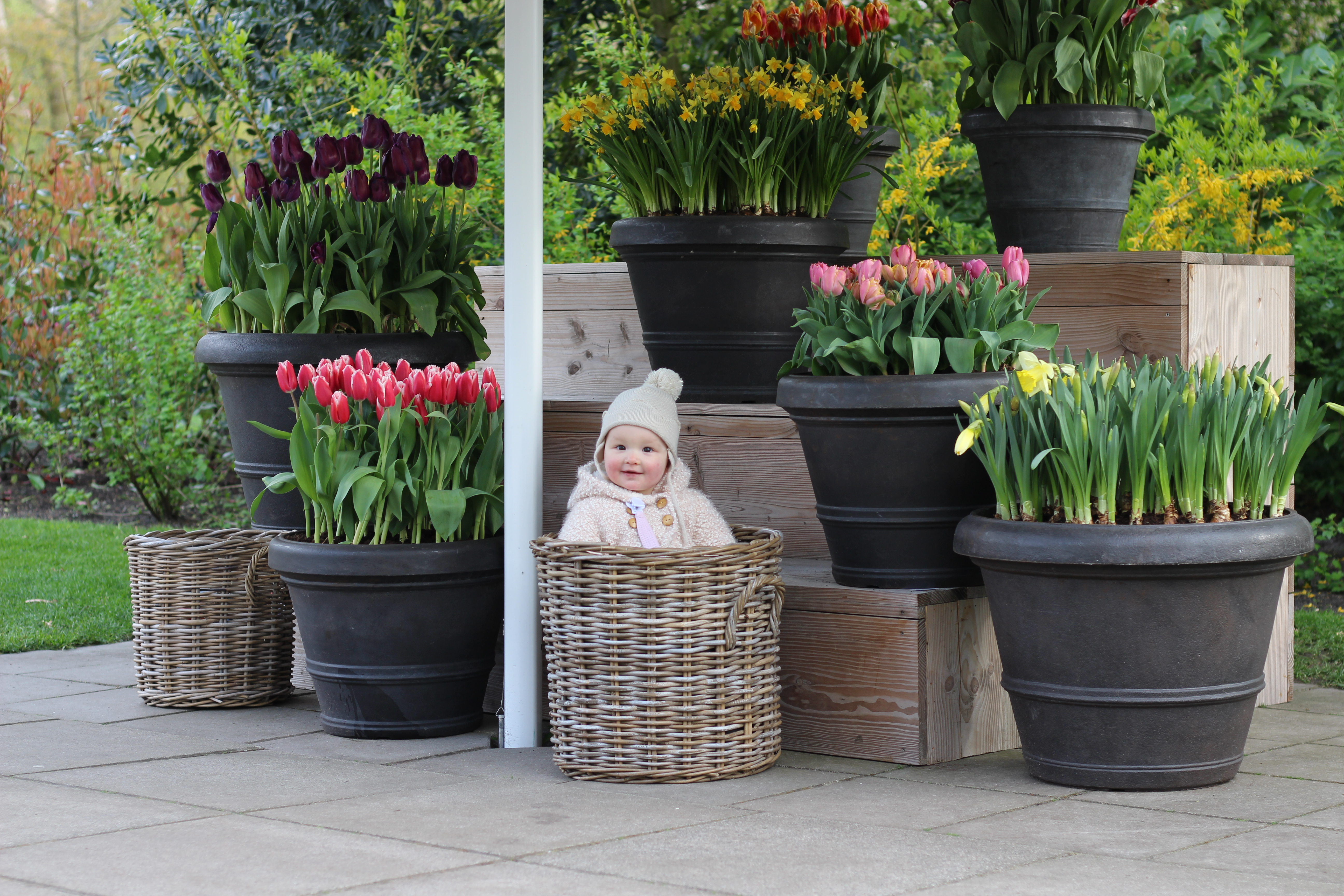 Baby tulpen