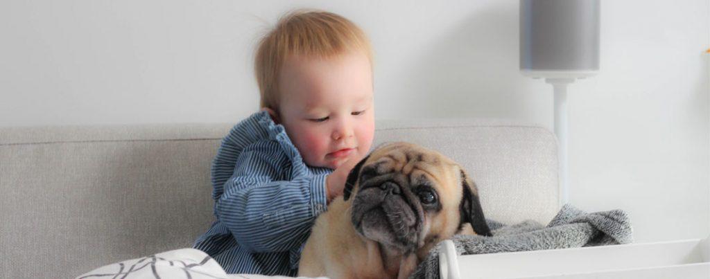 Acupunctuur voor de hond