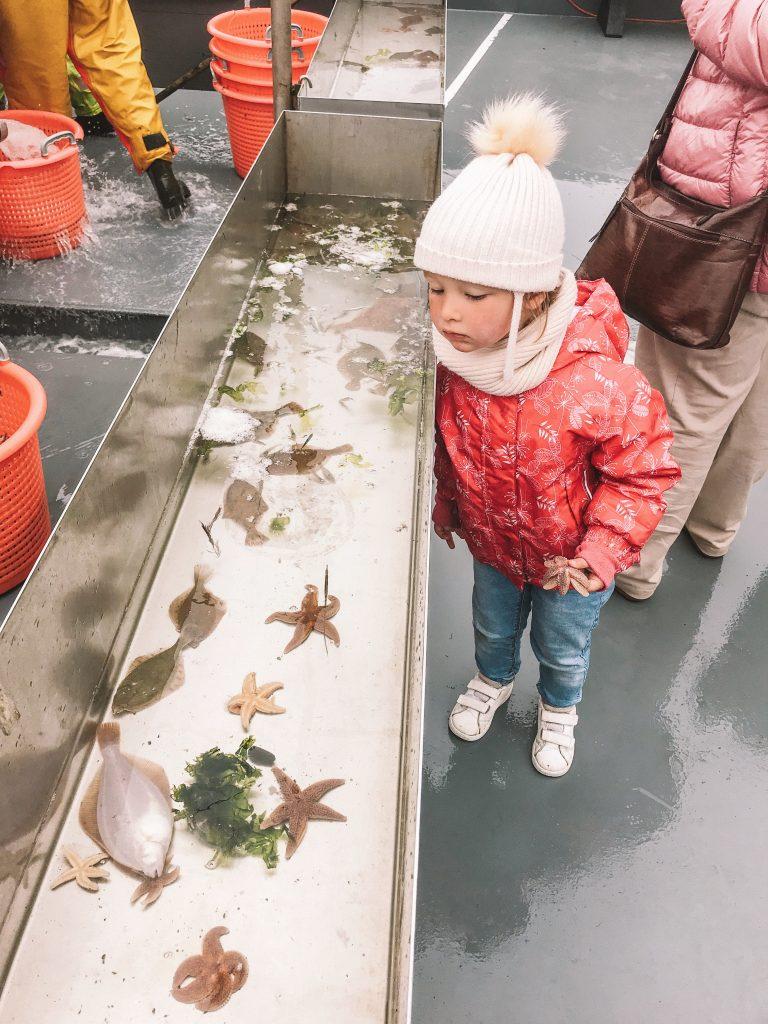 Garnalenvissen Waddenzee